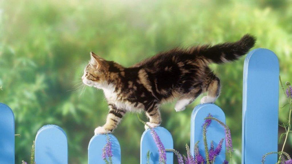 Как определить возраст котёнка: Способы и полезные советы для хозяев