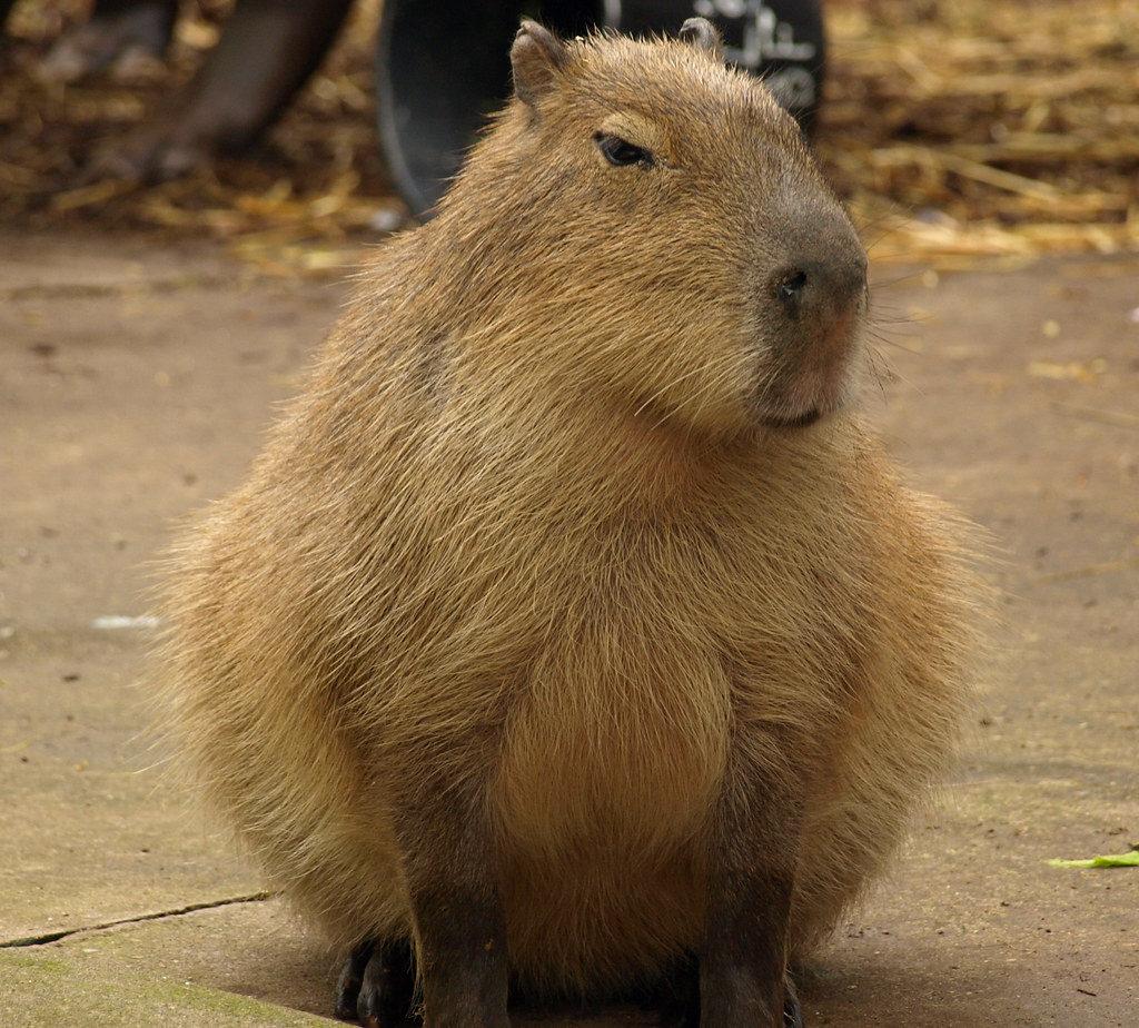 самые толстые животные в мире фото про фотографирование применение