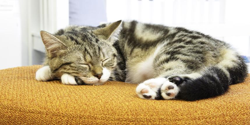 Как пережить смерть кота, смириться с утратой и избавиться от чувства вины?