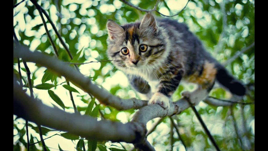 Кот пропал: что делать, где искать и как найти любимца?
