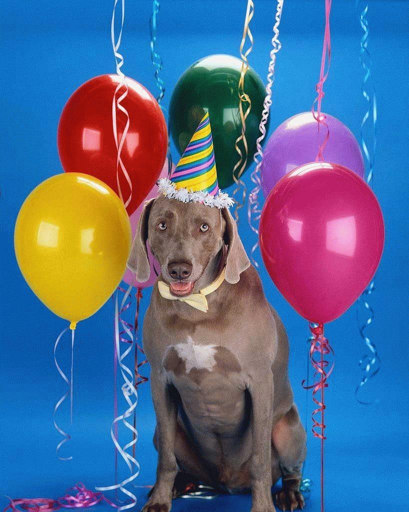 Сколько лет собаке по человеческим меркам? Считаем правильно