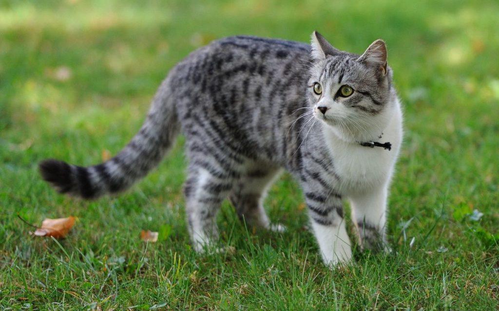 Сколько кошке «кошачьих лет»? Как считать и в чём тут разница?