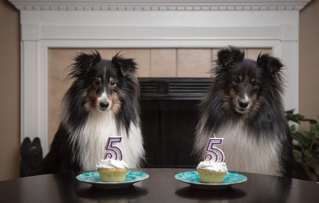 Сколько лет собаке по человеческим меркам? Почему правило 1 к 7 не работает?