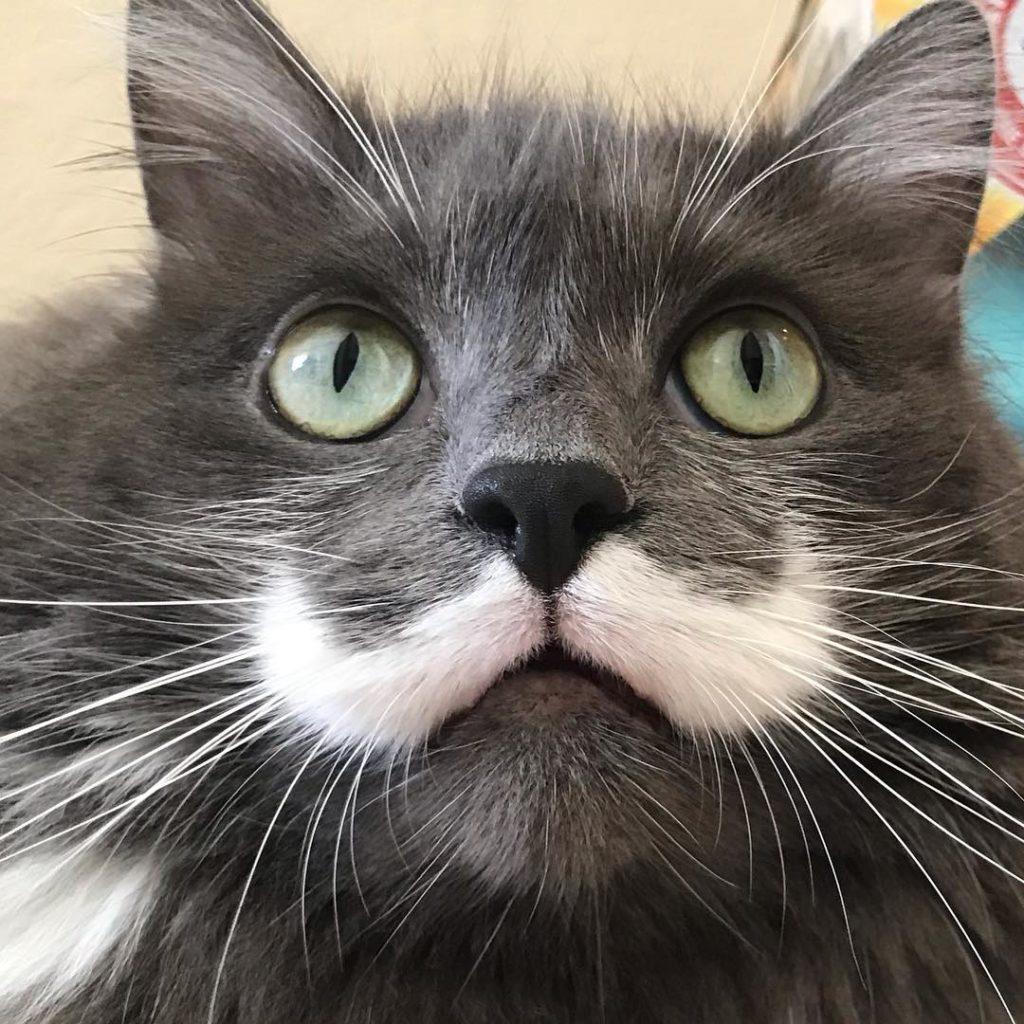 Самые необычные кошки нашей планеты
