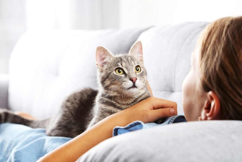 Стерилизация кота: стоит ли это делать и какие будут последствия?