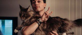 Кот Родиона Газманова Шелдон: фото, порода, особенности