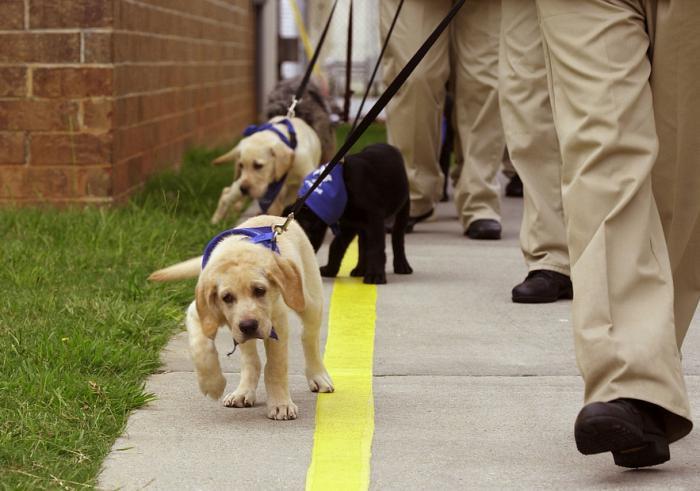 Элита четверолапого мира - собаки поводыри: как их обучают?