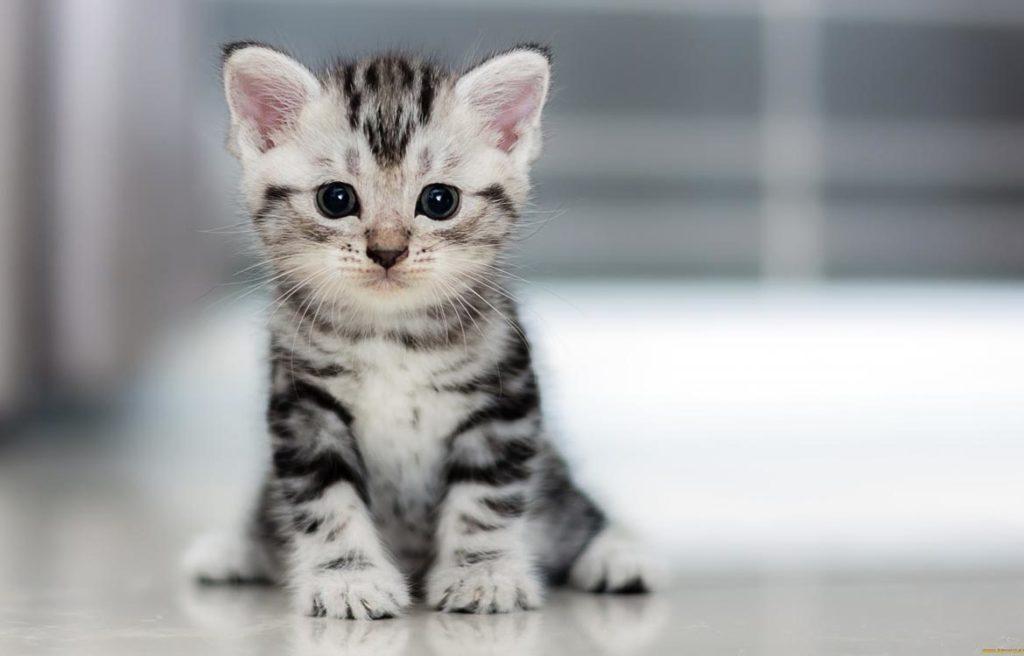 Возраст котёнка: как определить, различия, способы и советы