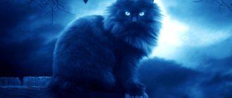 Смерть кота: как пережить, что делать, как справиться
