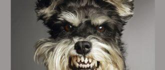 Опасные домашние животные: список, особенности, подробности