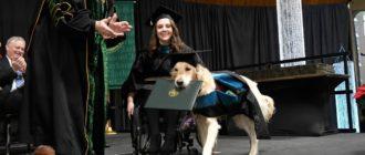 Собака поводырь: фото, обучение, отличия, польза