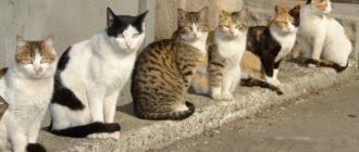 Беспородные кошки: фото, различия, как определить