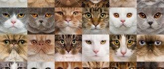 Породы кошек: как выбрать, названия, различия, особенности