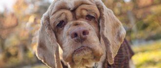 Сколько лет собаке по человеческим меркам: как считать