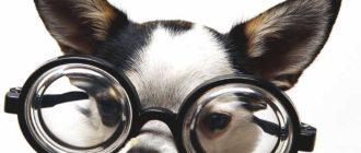 Умные породы собак: названия, фото, особенности, сравнение
