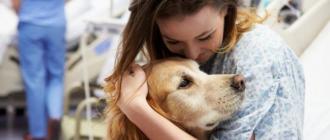 Канистерапия: собаки целители, список пород, польза