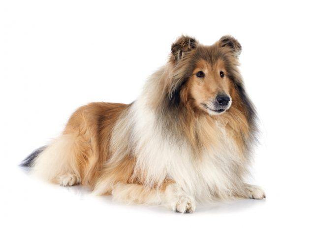 """Настоящие собаки-целители или """"канистерапия"""""""