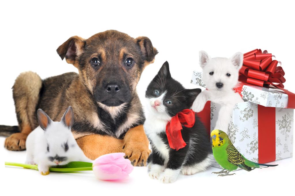 Топ 5 лучших домашних животных для детей