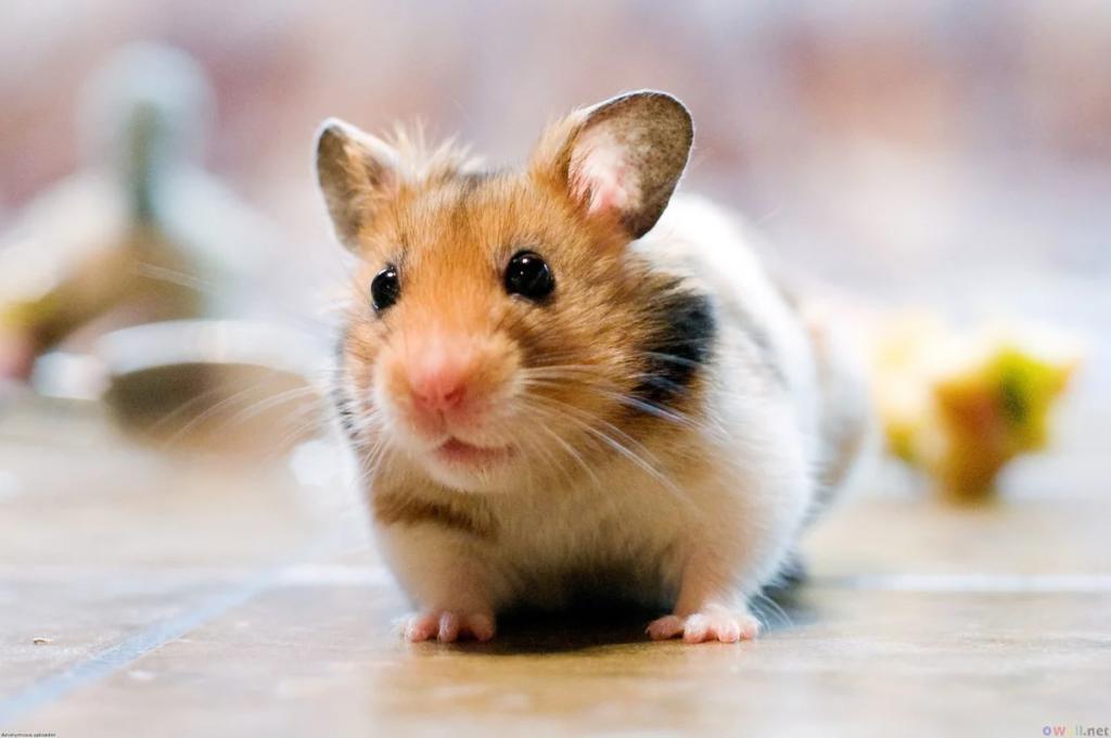 Топ 5 самых неприхотливых домашних животных