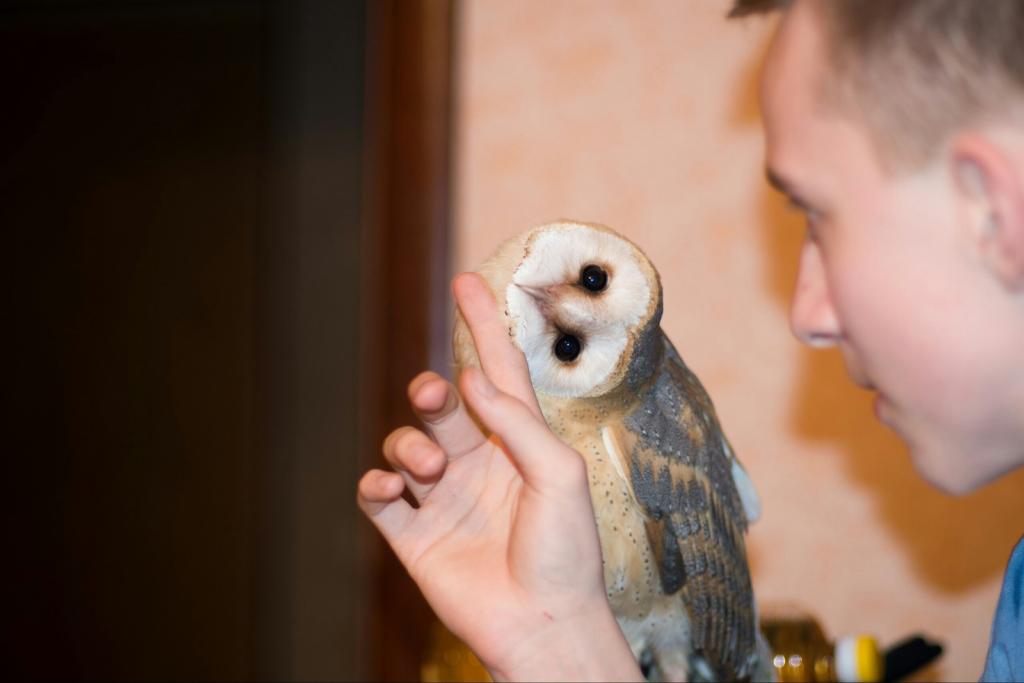 Это вам не Гарри Поттер: правда о содержании сов в домашних условиях