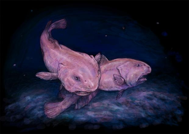 Рыба-капля: герой мемов и живой холодец по совместительству