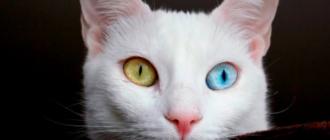 Необычные породы кошек: фото, история, внешний вид, особенности
