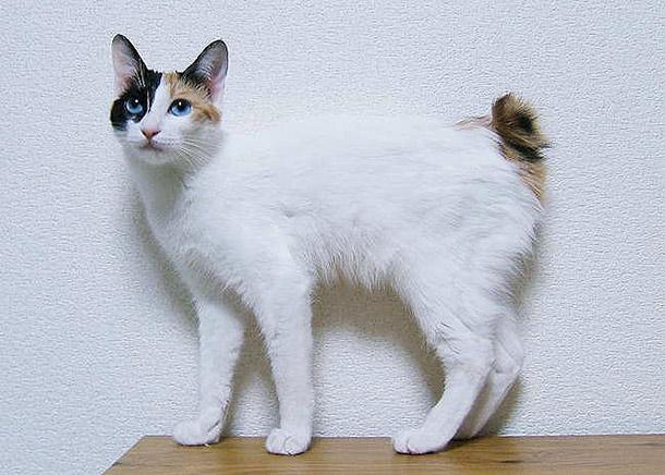 Самые необычные кошки планеты (часть 1)