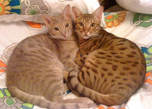 Самые необычные кошки планеты (часть 2)