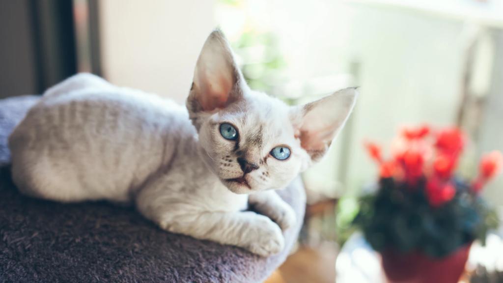 Кошки, которые не линяют - существуют ли они?