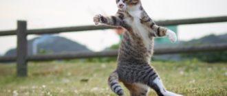Что нравится кошке: поведение, характер, уход, причины
