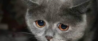 Кот обиделся: причины, поведение, характер, что делать