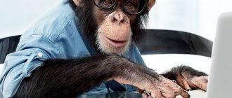 Умные животные: виды, фото, интеллект, обучаемость, причины