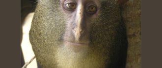 Животные с человеческими глазами: фото, внешний вид, причины