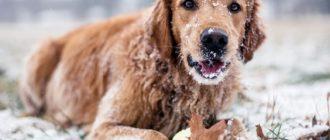 Собака зимой: фото, чем занять, игры, активность, питание