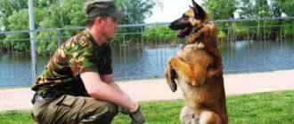 Команды для собак: список, значение, дрессировка, применение