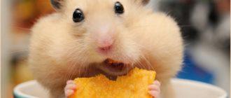 Животные для детей: фото, виды, питание, поведение, уход