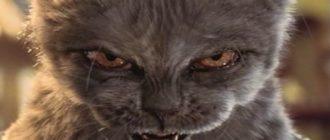 Домашний кот: фото, породы, характер, как выбрать, уход