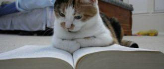 Умные кошки: породы, названия, особенности, характер