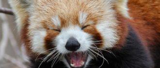 Дикие животные: фото, названия, внешний вид, особенности
