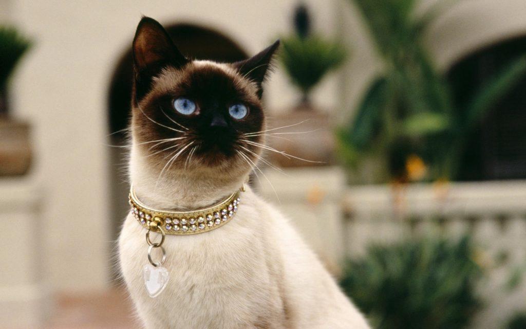 Как кошки приручили человека: история