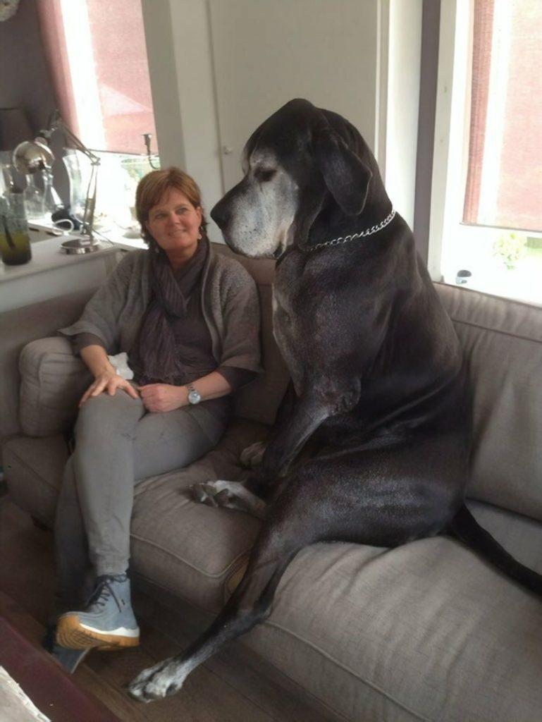 Огромные собаки: как правильно выбрать подходящую породу