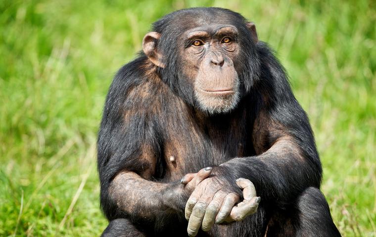 Топ 10 Самых умных животных в мире
