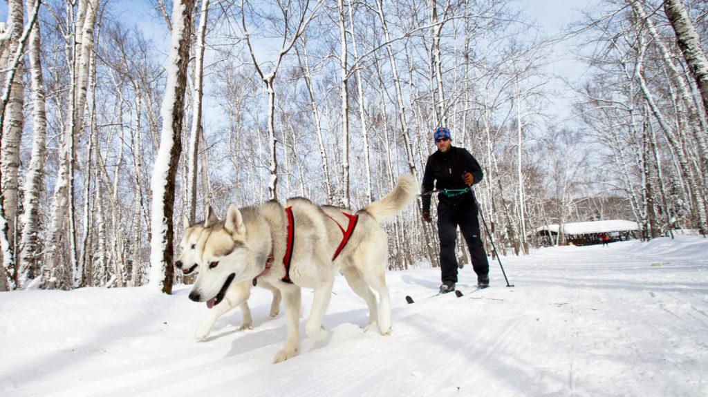 Чем занять любимого собакена зимой