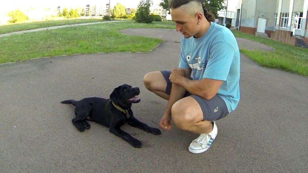 Пять команд которым должна быть обучена каждая собака