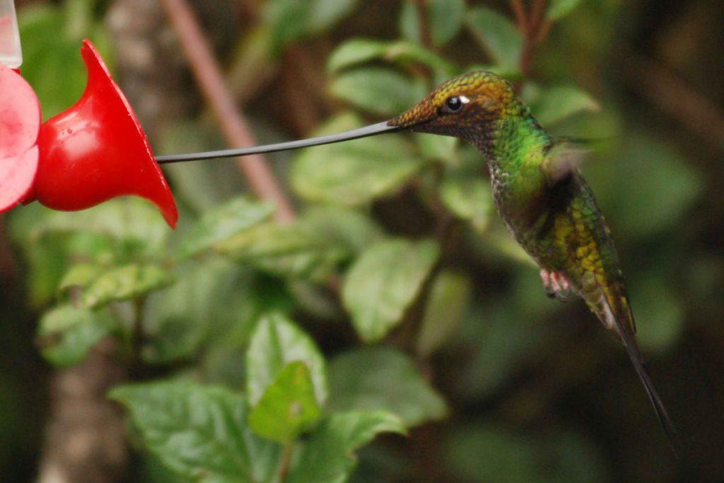 Птицы с самыми необычными клювами