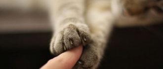 Контакт с котенком: поведение, воспитание, характер, уход