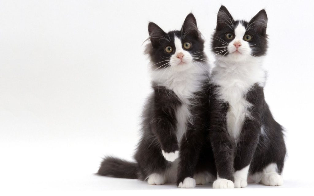 Почему бы и нет: как клонировать животное в домашних условиях