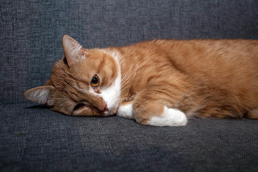 Кот обиделся: что делать, как найти общий язык?