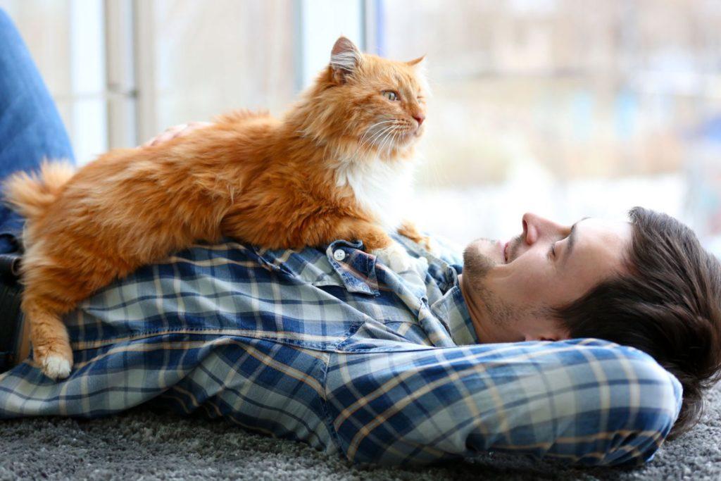 Что любит ваша любимая котейка