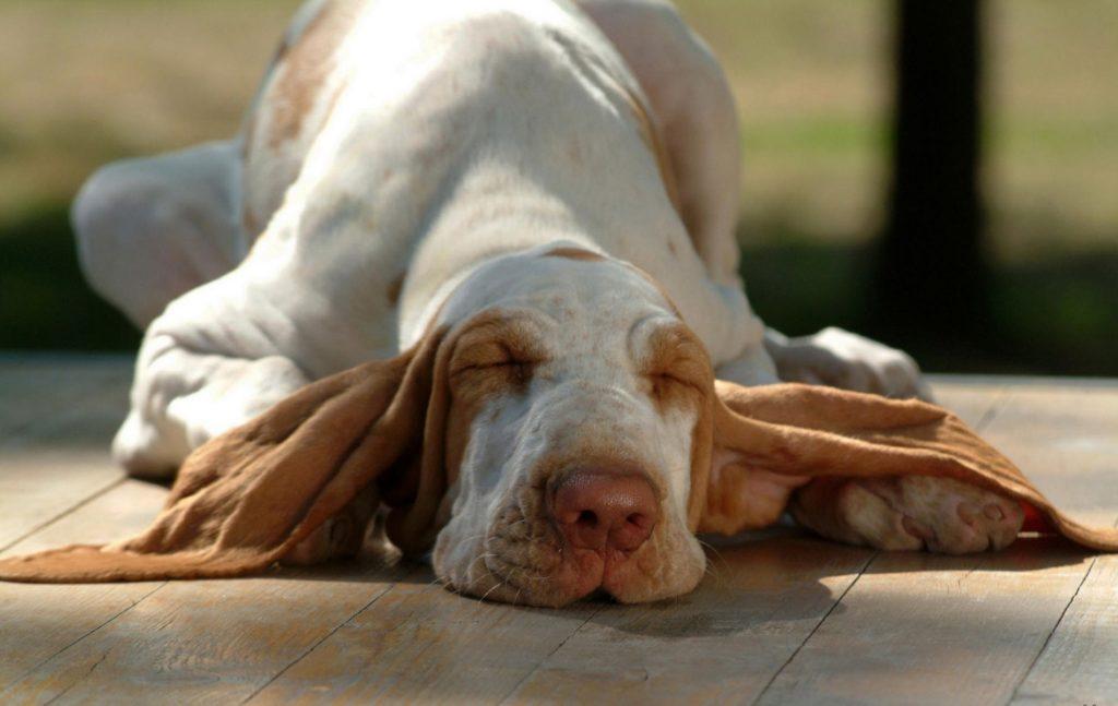К чему снится собака: Секреты и значения сновидений
